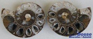 Ammoniten-Pärchen